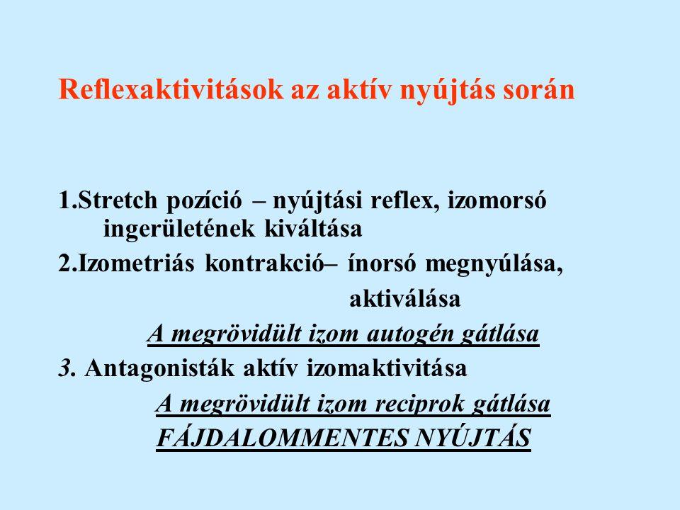 Reflexaktivitások az aktív nyújtás során 1.Stretch pozíció – nyújtási reflex, izomorsó ingerületének kiváltása 2.Izometriás kontrakció– ínorsó megnyúl