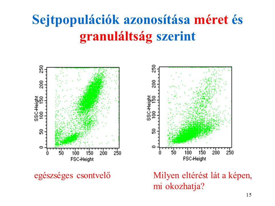 15 Sejtpopulációk azonosítása méret és granuláltság szerint egészséges csontvelőMilyen eltérést lát a képen, mi okozhatja?