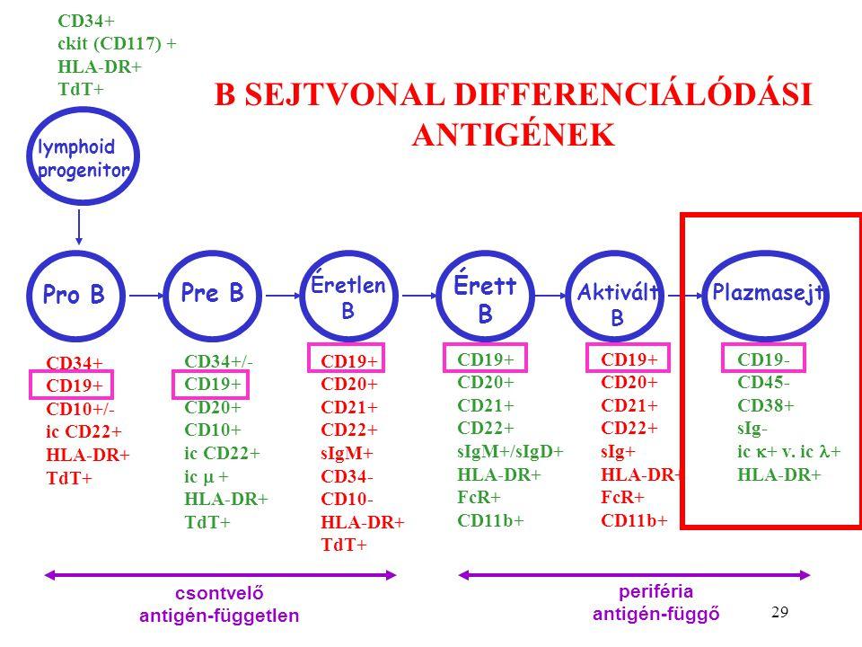 29 B SEJTVONAL DIFFERENCIÁLÓDÁSI ANTIGÉNEK Pro B Pre B Éretlen B Érett B Aktivált B Plazmasejt lymphoid progenitor CD34+ CD19+ CD10+/- ic CD22+ HLA-DR