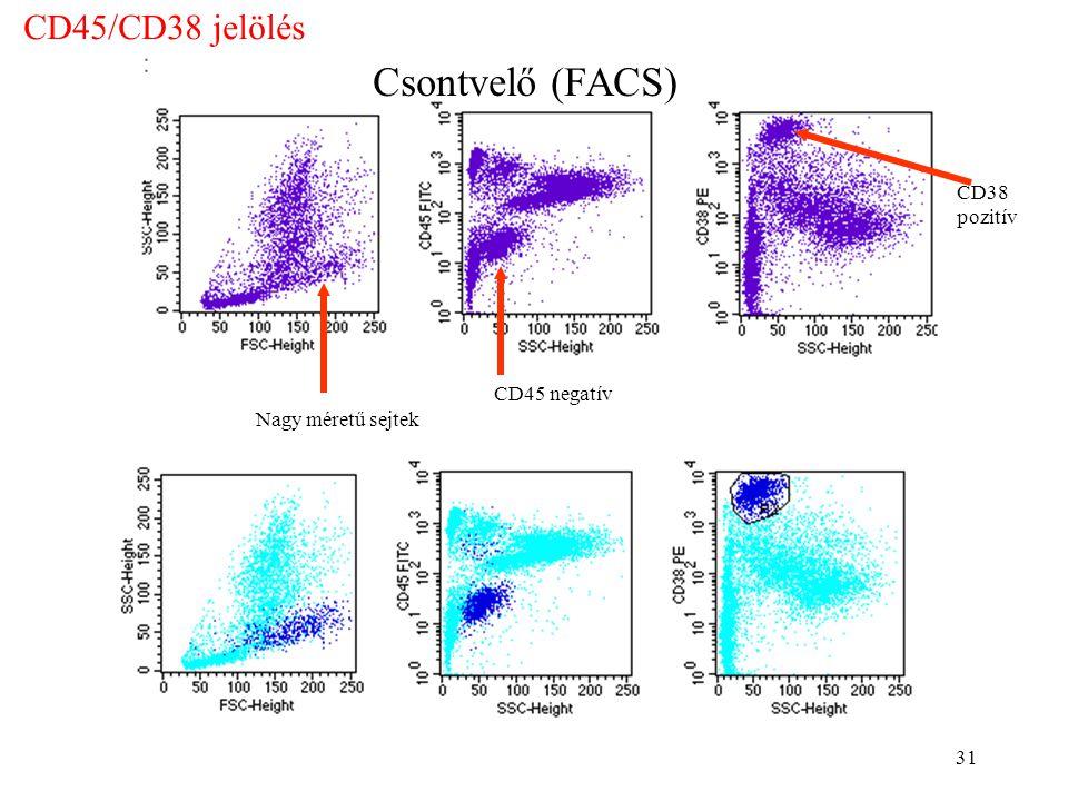 31 Csontvelő (FACS) Nagy méretű sejtek CD45 negatív CD38 pozitív CD45/CD38 jelölés