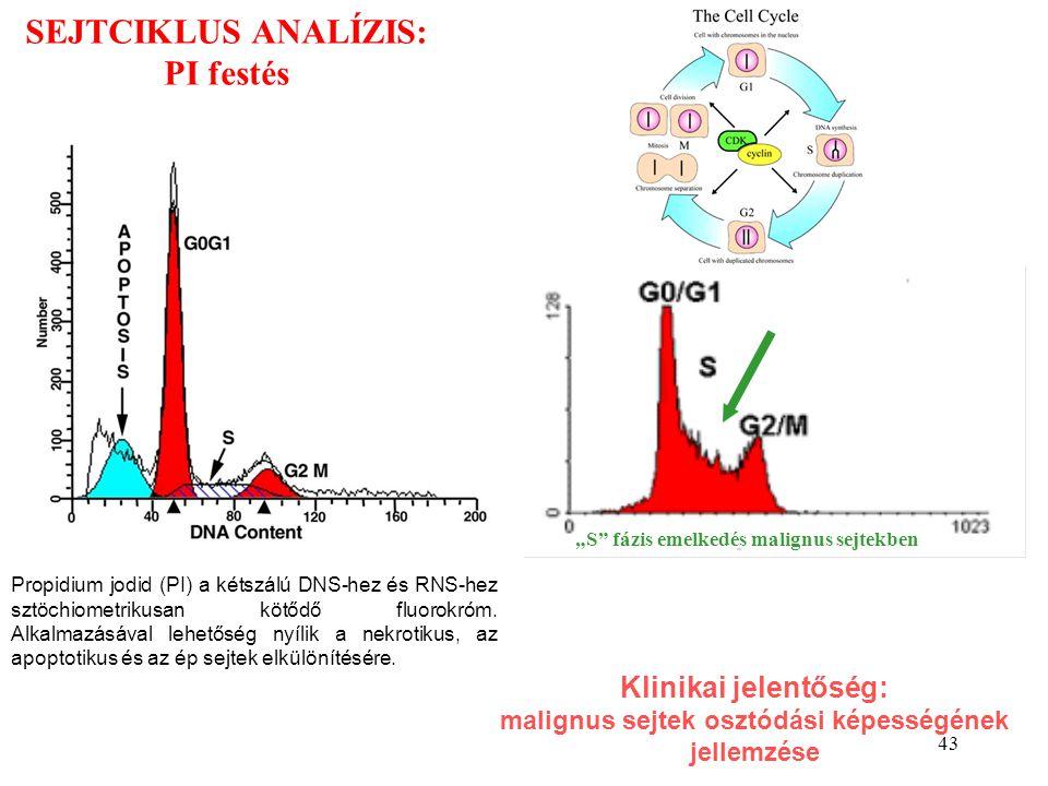 43 SEJTCIKLUS ANALÍZIS: PI festés Propidium jodid (PI) a kétszálú DNS-hez és RNS-hez sztöchiometrikusan kötődő fluorokróm. Alkalmazásával lehetőség ny