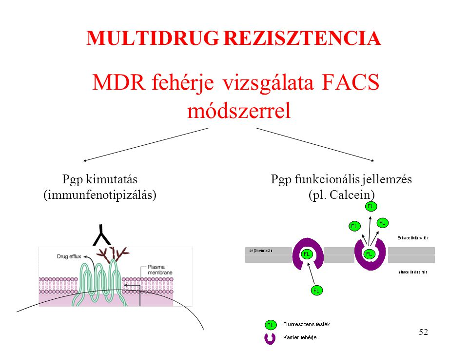 52 MULTIDRUG REZISZTENCIA MDR fehérje vizsgálata FACS módszerrel Pgp kimutatás (immunfenotipizálás) Pgp funkcionális jellemzés (pl. Calcein)