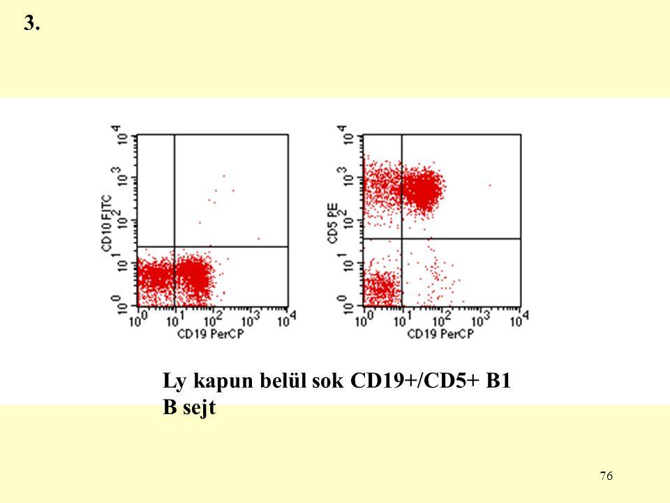 76 3. Ly kapun belül sok CD19+/CD5+ B1 B sejt