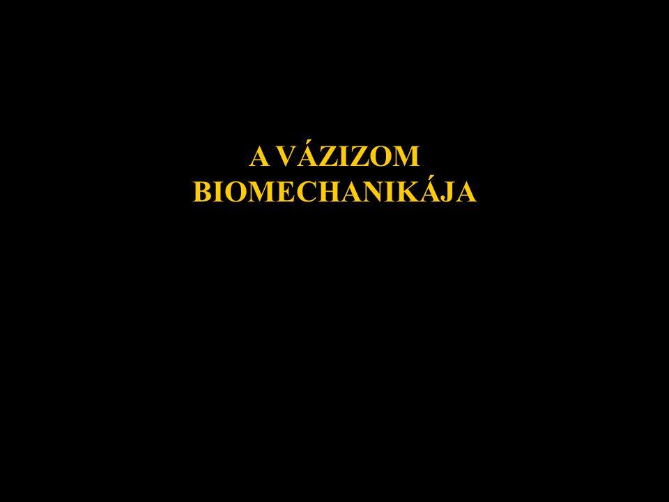 AKTÍV - IZOM PASSZÍV -ÍN SZALAG PORC CSONT