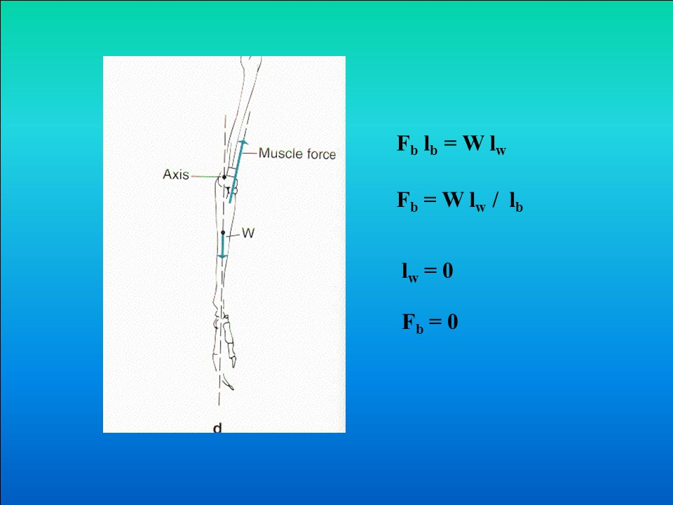 F b l b = W l w F b = W l w / l b F b / W= l w / l b