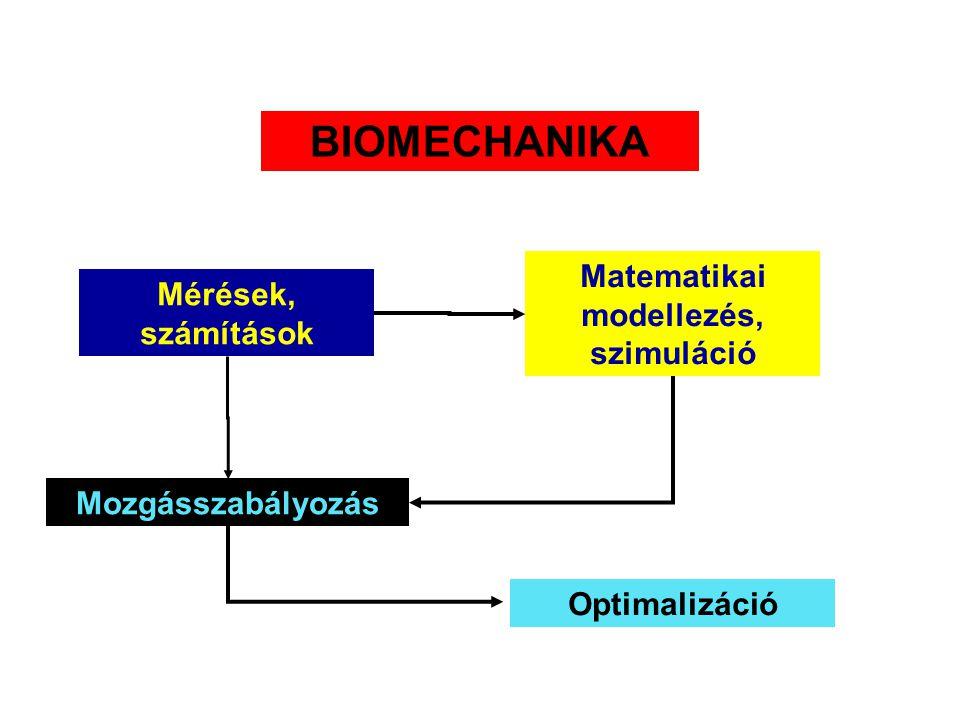 MECHANIKA S(Z)TATIKADINAMIKA Egyensúly, állásstabilitás Kinematika Tér, idő, sebesség, gyorsulás Statikus erőkifejtés Kinetika Erő Munka, energia, tel