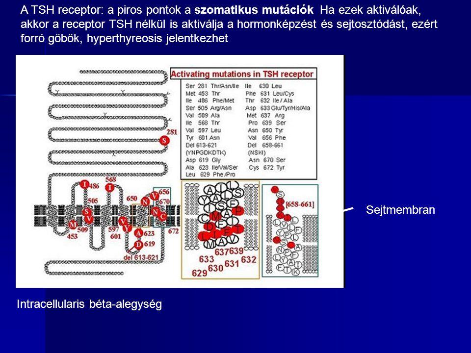 Sejtmembran Intracellularis béta-alegység A TSH receptor: a piros pontok a szomatikus mutációk Ha ezek aktiválóak, akkor a receptor TSH nélkül is akti