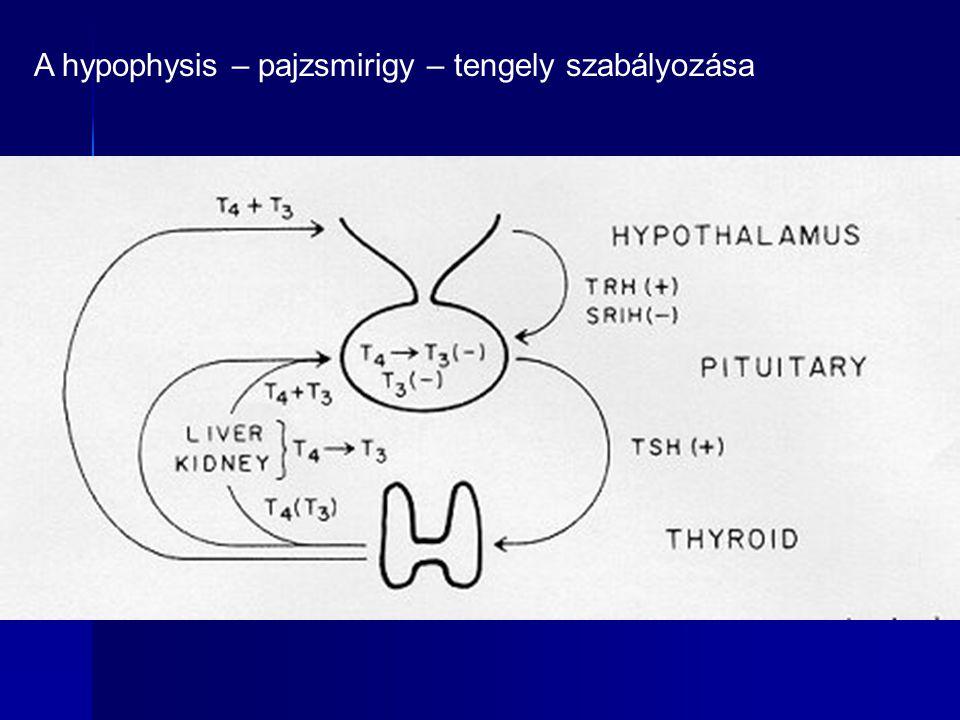 Az endogén subclinicus hyperthyreosis a postmenopausában osteoporosis rizikó combnyak és radius (Mudde et al.Clin Endocrinol 1992, Földes et al.Clin Endocrinol l993) combnyak és radius (Mudde et al.Clin Endocrinol 1992, Földes et al.Clin Endocrinol l993) Radiojód kezelés kivédi az évi 2%-os csontvesztést (Faber et al.