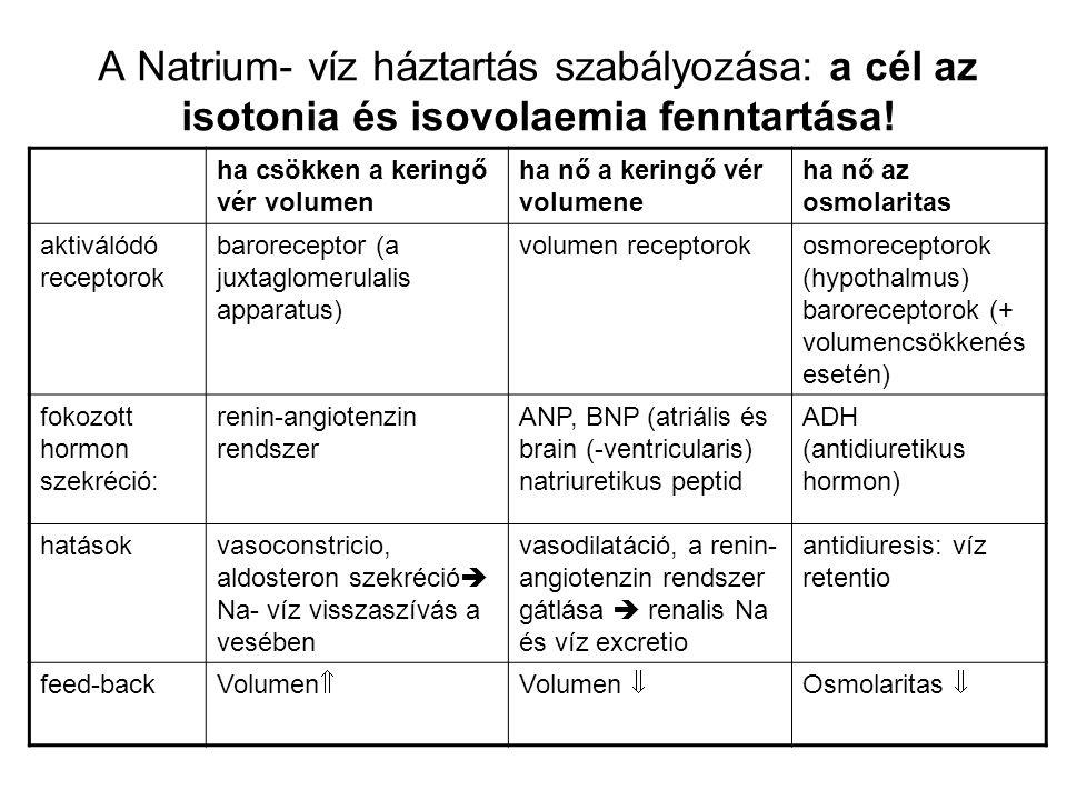 A Natrium- víz háztartás szabályozása: a cél az isotonia és isovolaemia fenntartása! ha csökken a keringő vér volumen ha nő a keringő vér volumene ha
