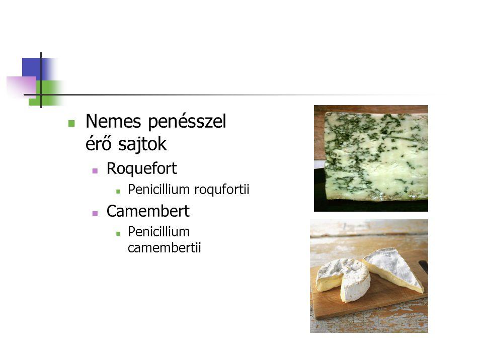 Nemes penésszel érő sajtok Roquefort Penicillium roqufortii Camembert Penicillium camembertii