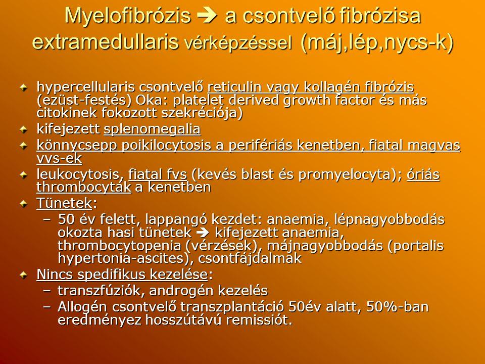 Myelofibrózis  a csontvelő fibrózisa extramedullaris vérképzéssel (máj,lép,nycs-k) hypercellularis csontvelő reticulin vagy kollagén fibrózis (ezüst-