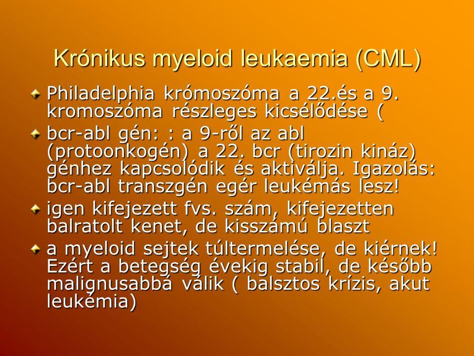 Krónikus myeloid leukaemia (CML) Philadelphia krómoszóma a 22.és a 9. kromoszóma részleges kicsélődése ( bcr-abl gén: : a 9-ről az abl (protoonkogén)