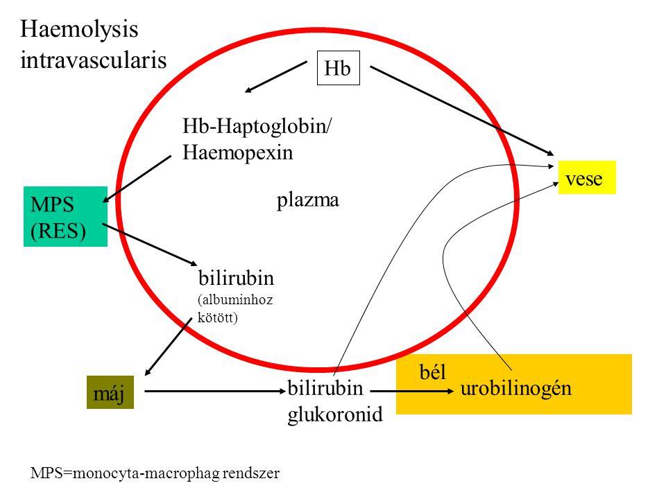 Hb Hb-Haptoglobin/ Haemopexin MPS (RES) MPS=monocyta-macrophag rendszer vese plazma bilirubin (albuminhoz kötött) máj bilirubin glukoronid bél urobili