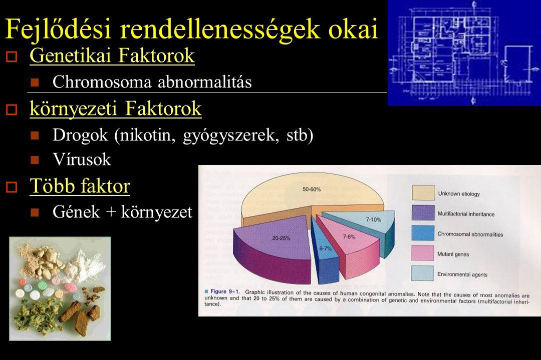 Fejlődési rendellenességek okai  Genetikai Faktorok Chromosoma abnormalitás  környezeti Faktorok Drogok (nikotin, gyógyszerek, stb) Vírusok  Több f