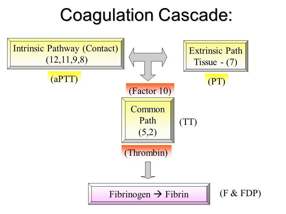 Coagulation Cascade: Intrinsic Pathway (Contact) (12,11,9,8) Extrinsic Path Tissue Tissue - (7) Fibrinogen  Fibrin Common Path Path (5,2) (PT) (aPTT)