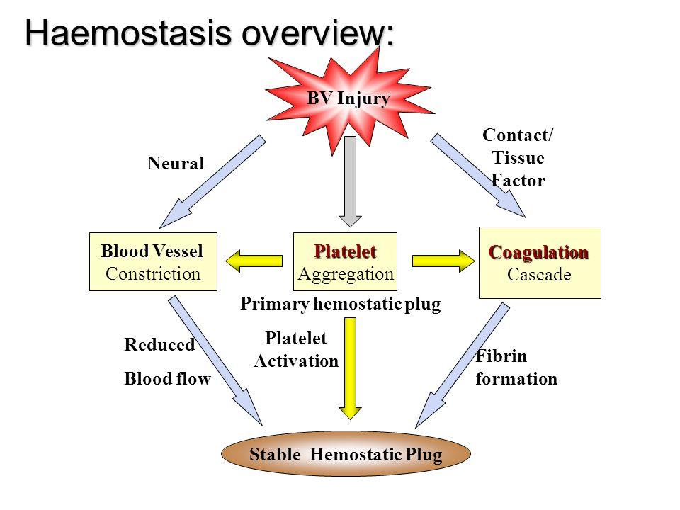 Haemostasis overview: BV Injury Platelet Aggregation Platelet Activation Blood Vessel Constriction Coagulation Cascade Stable Hemostatic Plug Fibrin f