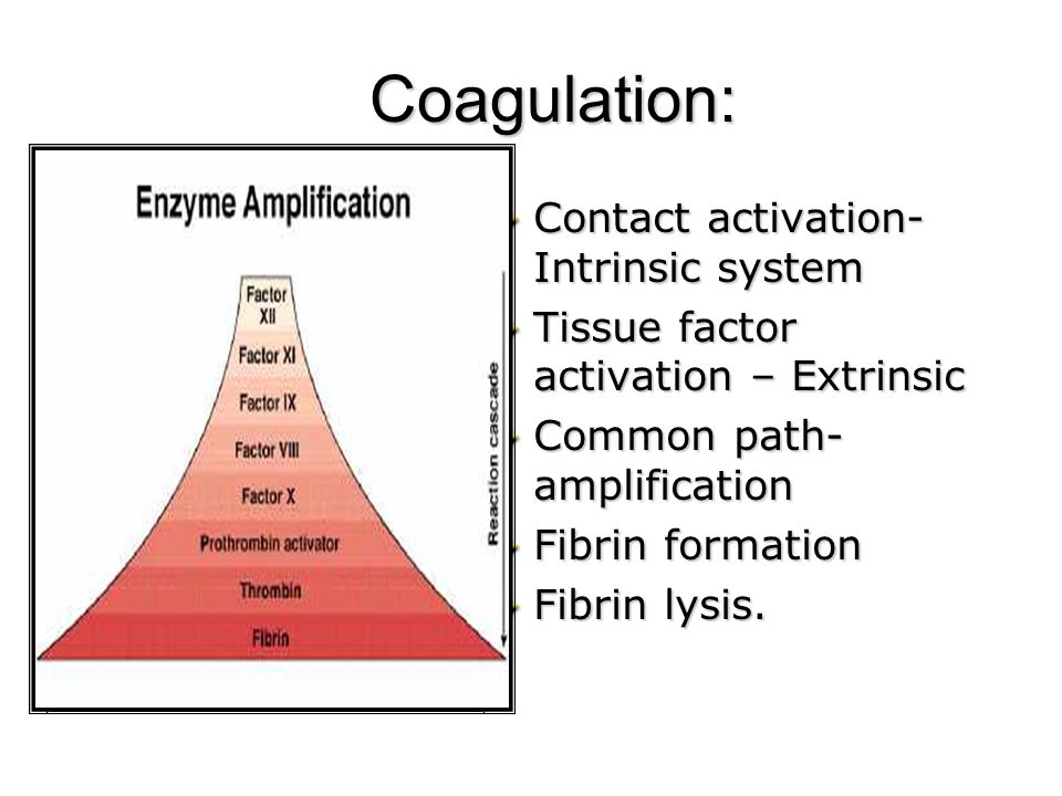 Coagulation: Contact activation- Intrinsic system Tissue factor activation – Extrinsic Common path- amplification Fibrin formation Fibrin lysis.