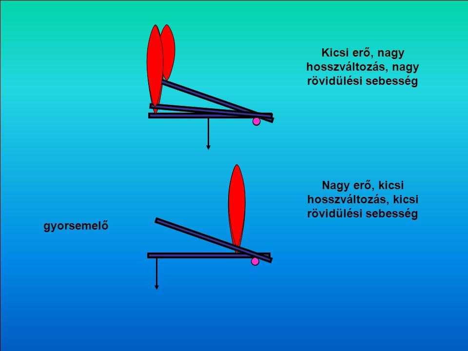 A három könyökhajlító forgatónyomatéka F k F1F1 F2F2 F3F3 k3k3 k2k2 k1k1