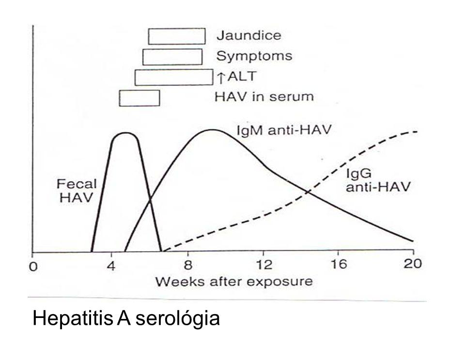 Hepatitis A serológia