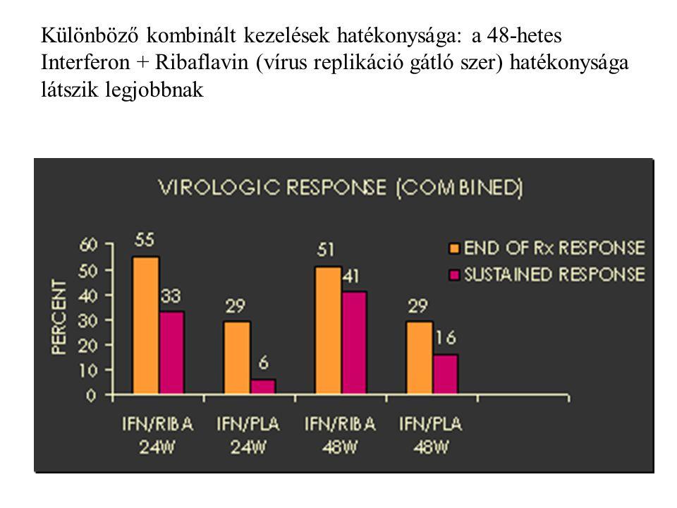 Különböző kombinált kezelések hatékonysága: a 48-hetes Interferon + Ribaflavin (vírus replikáció gátló szer) hatékonysága látszik legjobbnak