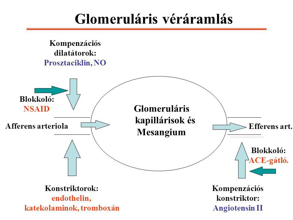 Glomeruláris véráramlás Afferens arteriola Efferens art. Glomeruláris kapillárisok és Mesangium Konstriktorok: endothelin, katekolaminok, tromboxán Ko