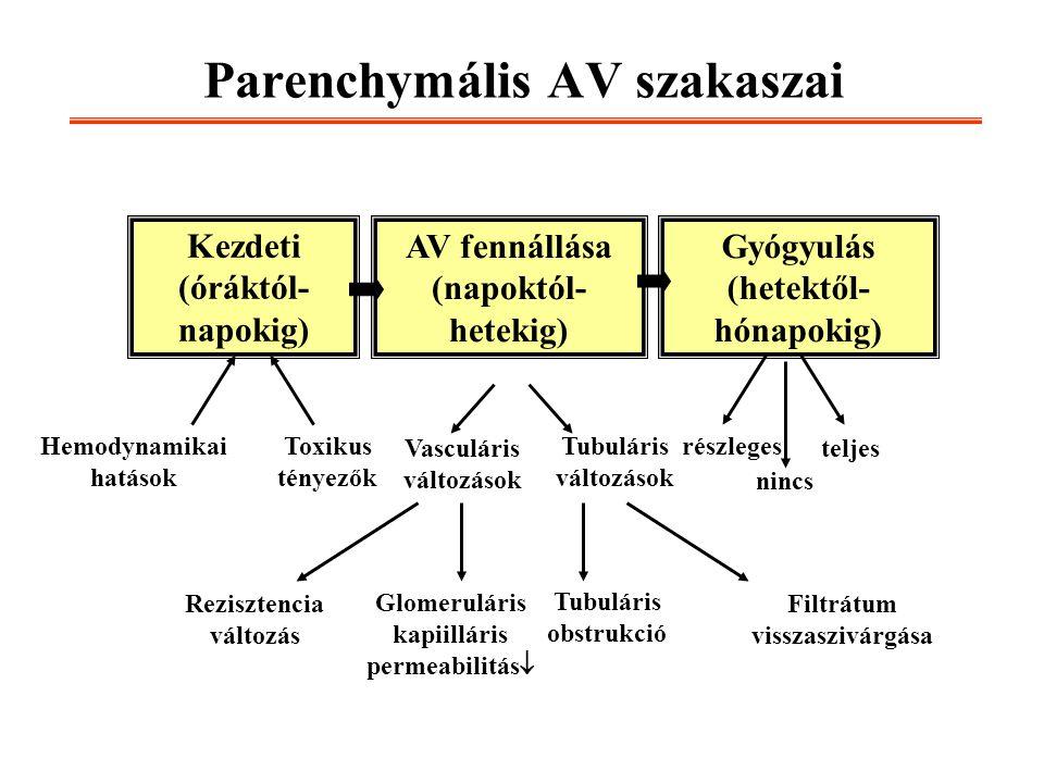 Parenchymális AV szakaszai Kezdeti (óráktól- napokig) Gyógyulás (hetektől- hónapokig) AV fennállása (napoktól- hetekig) Hemodynamikai hatások Toxikus