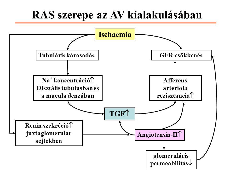 Ischaemia GFR csökkenésTubuláris károsodás Na + koncentráció  Disztális tubulusban és a macula denzában Afferens arteriola rezisztancia  TGF  Angio