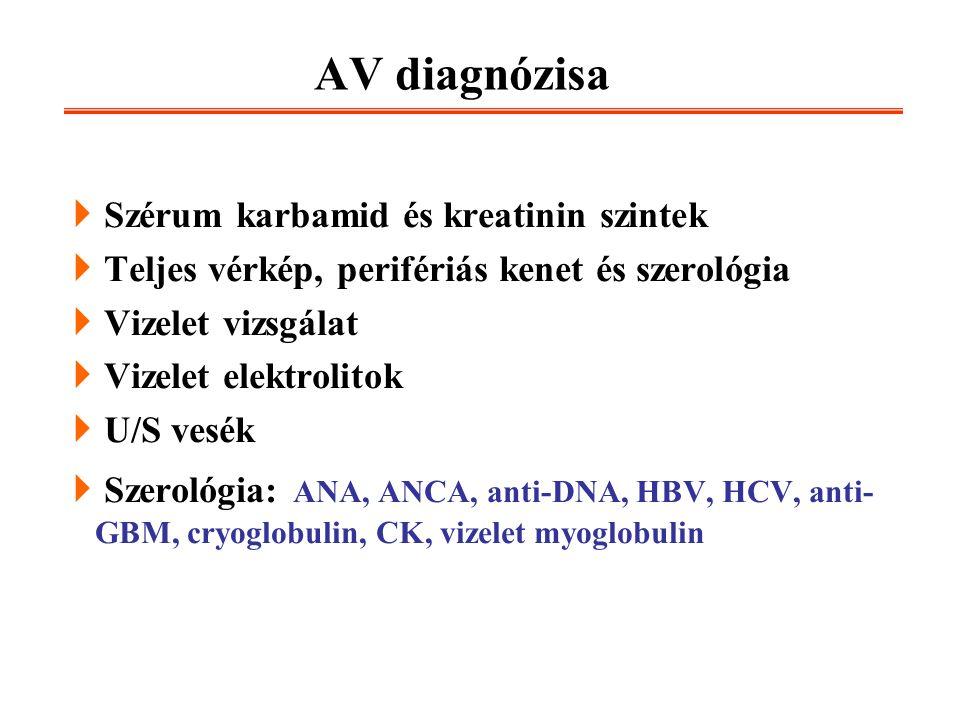 AV diagnózisa  Szérum karbamid és kreatinin szintek  Teljes vérkép, perifériás kenet és szerológia  Vizelet vizsgálat  Vizelet elektrolitok  U/S