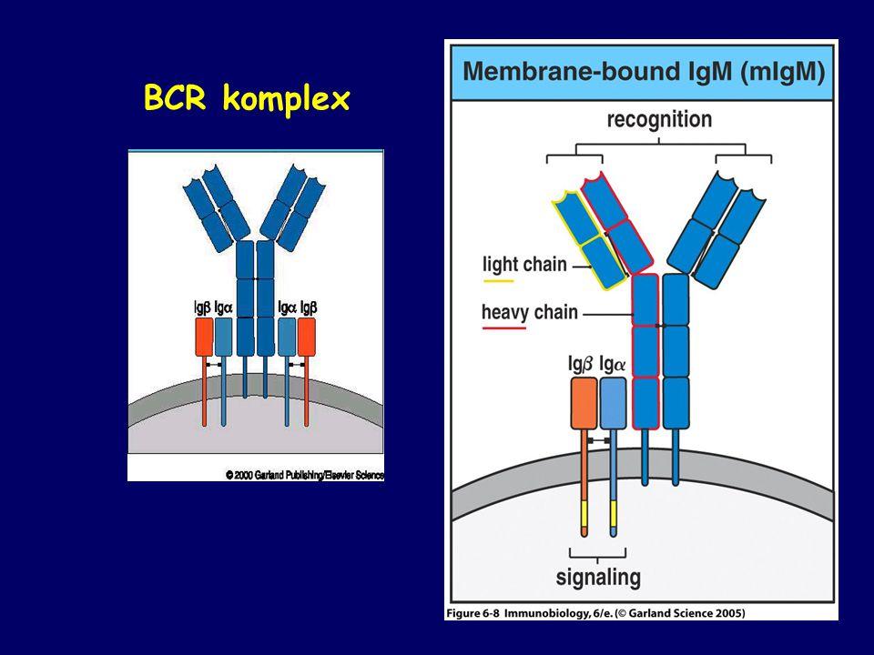 BCR komplex