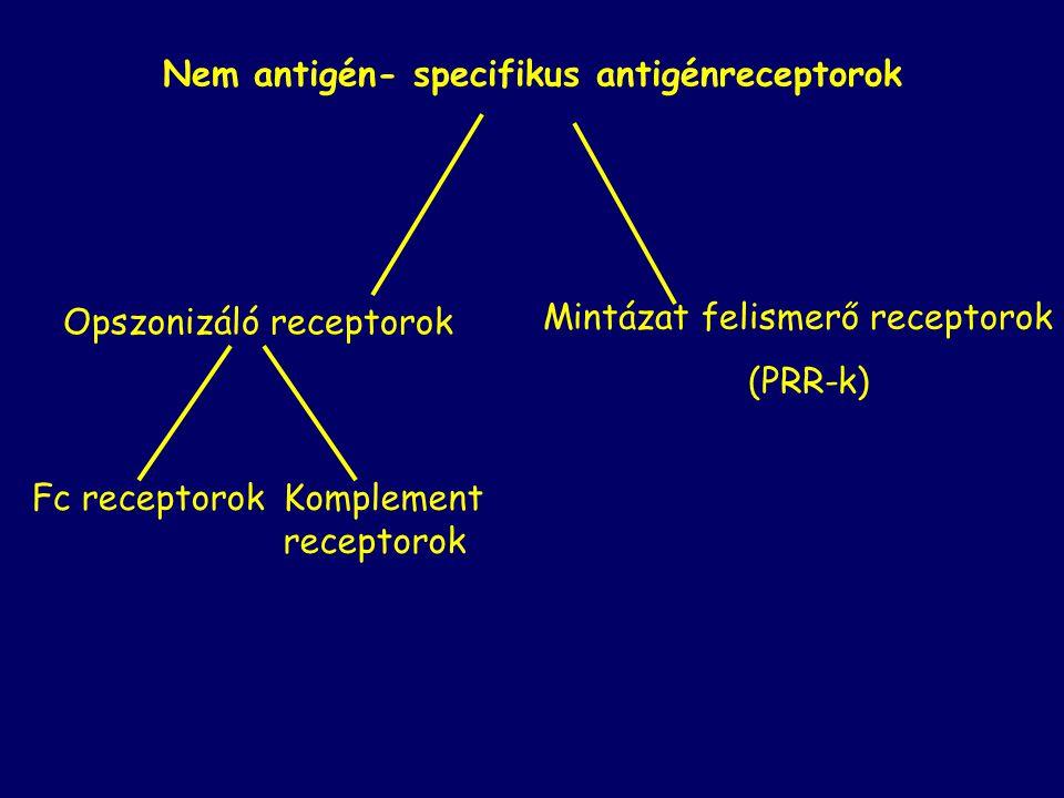 Nem antigén- specifikus antigénreceptorok Opszonizáló receptorok Mintázat felismerő receptorok (PRR-k) Fc receptorokKomplement receptorok
