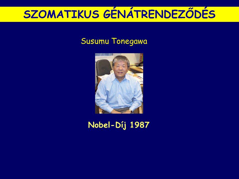Susumu Tonegawa Nobel-Díj 1987 SZOMATIKUS GÉNÁTRENDEZŐDÉS