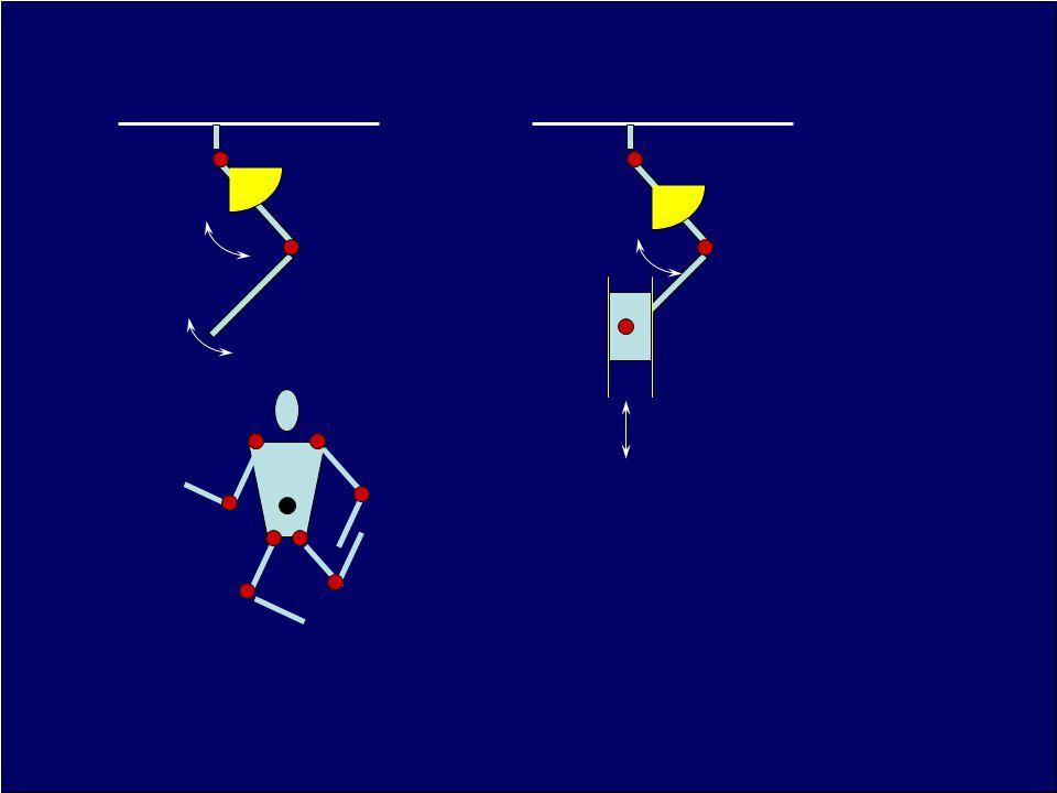 Korlátozottság az egész test vonatkozásában Anatómiai adjunctus (független) Conjunctus vagy összekötött ( az izületek mozgása egymástól függ)