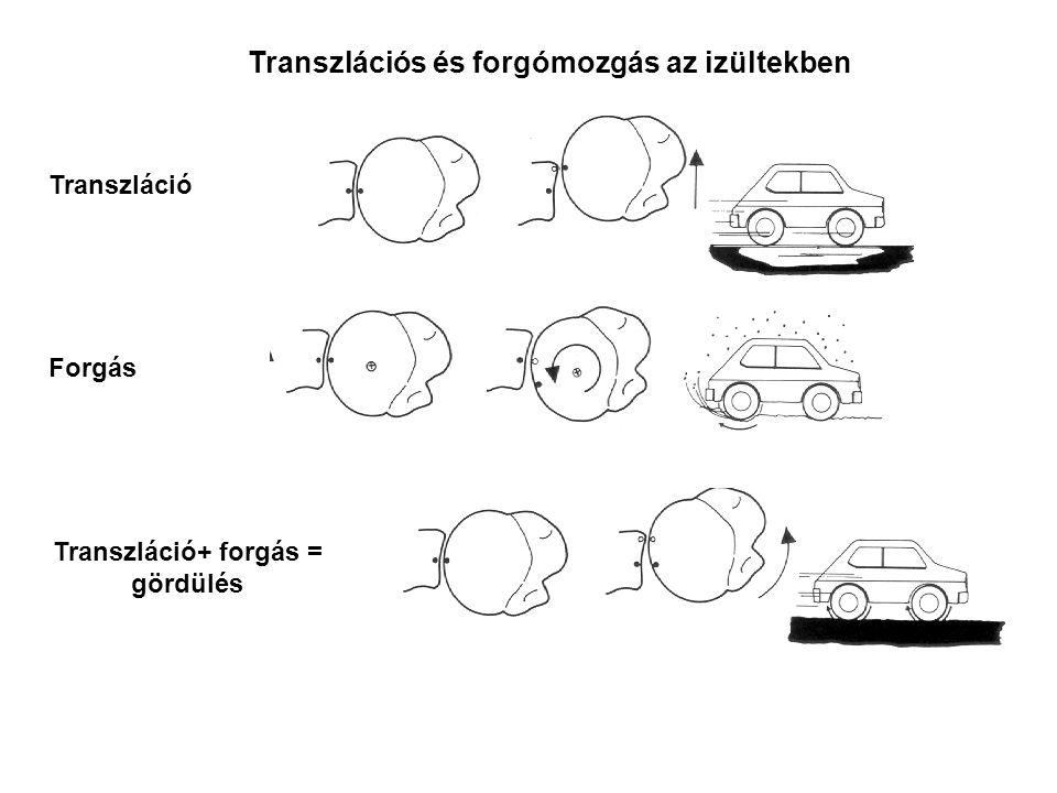 Transzlációs és forgómozgás az izültekben Transzláció Forgás Transzláció+ forgás = gördülés