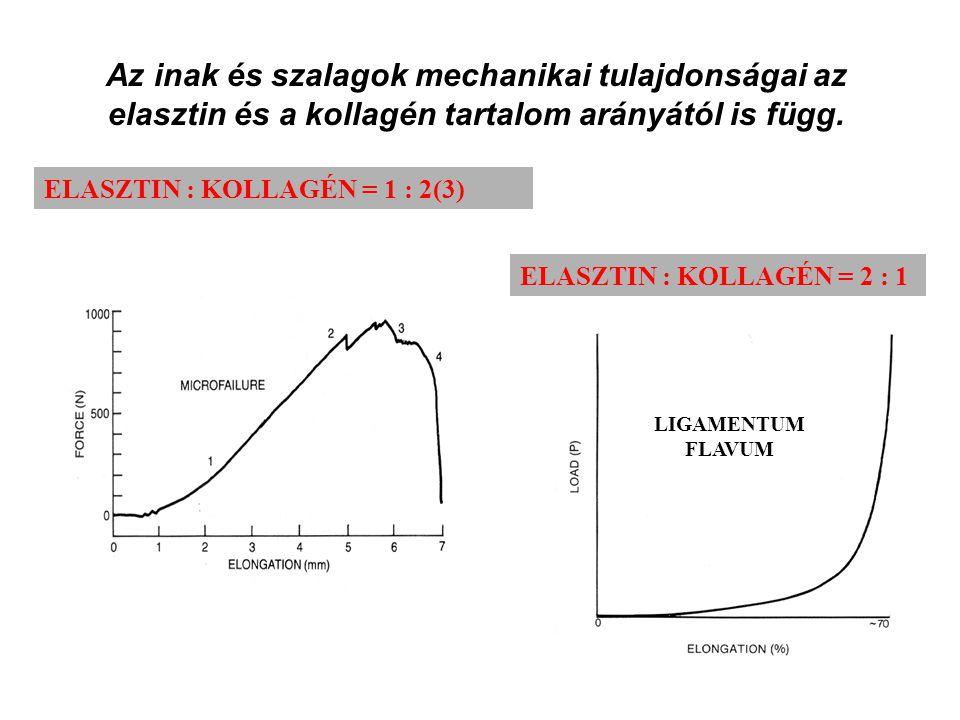 LIGAMENTUM FLAVUM ELASZTIN : KOLLAGÉN = 2 : 1 Az inak és szalagok mechanikai tulajdonságai az elasztin és a kollagén tartalom arányától is függ.