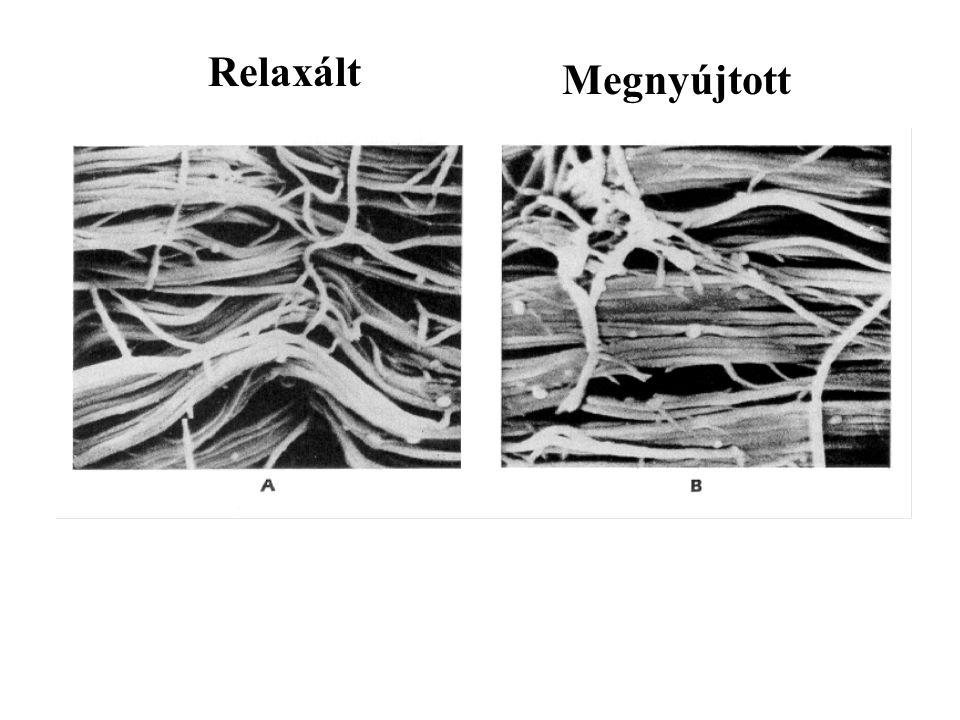 Ásványi anyag tartalom – keménység Kollagén – erő A csont mechanikai tulajdonságai a kollagén és ásványi anyag tartalom közötti egyensúlyt fejezik ki.
