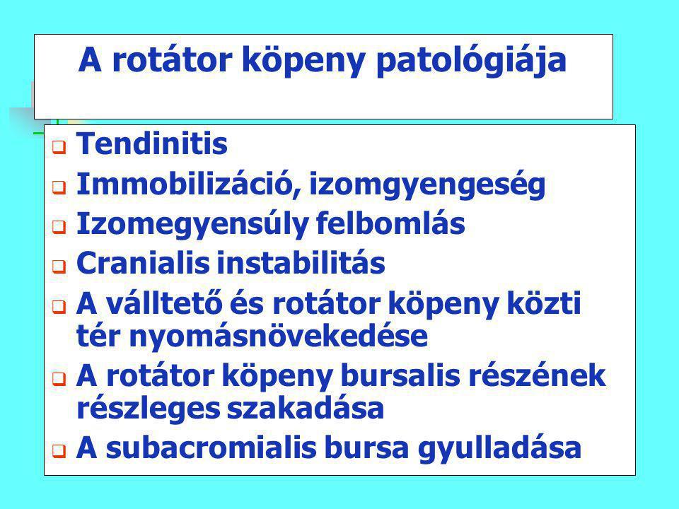 A rotátor köpeny patológiája  Tendinitis  Immobilizáció, izomgyengeség  Izomegyensúly felbomlás  Cranialis instabilitás  A válltető és rotátor kö