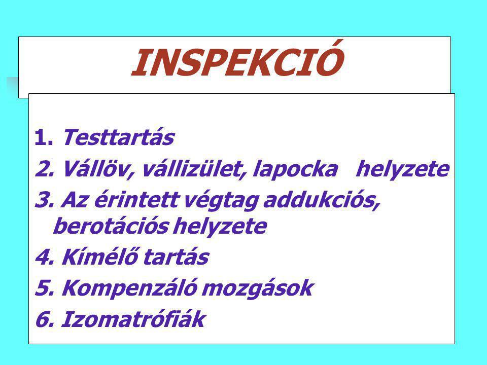 INSPEKCIÓ 1. Testtartás 2. Vállöv, vállizület, lapocka helyzete 3. Az érintett végtag addukciós, berotációs helyzete 4. Kímélő tartás 5. Kompenzáló mo