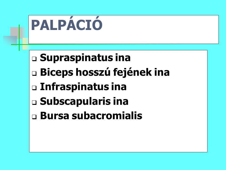 PALPÁCIÓ  Supraspinatus ina  Biceps hosszú fejének ina  Infraspinatus ina  Subscapularis ina  Bursa subacromialis