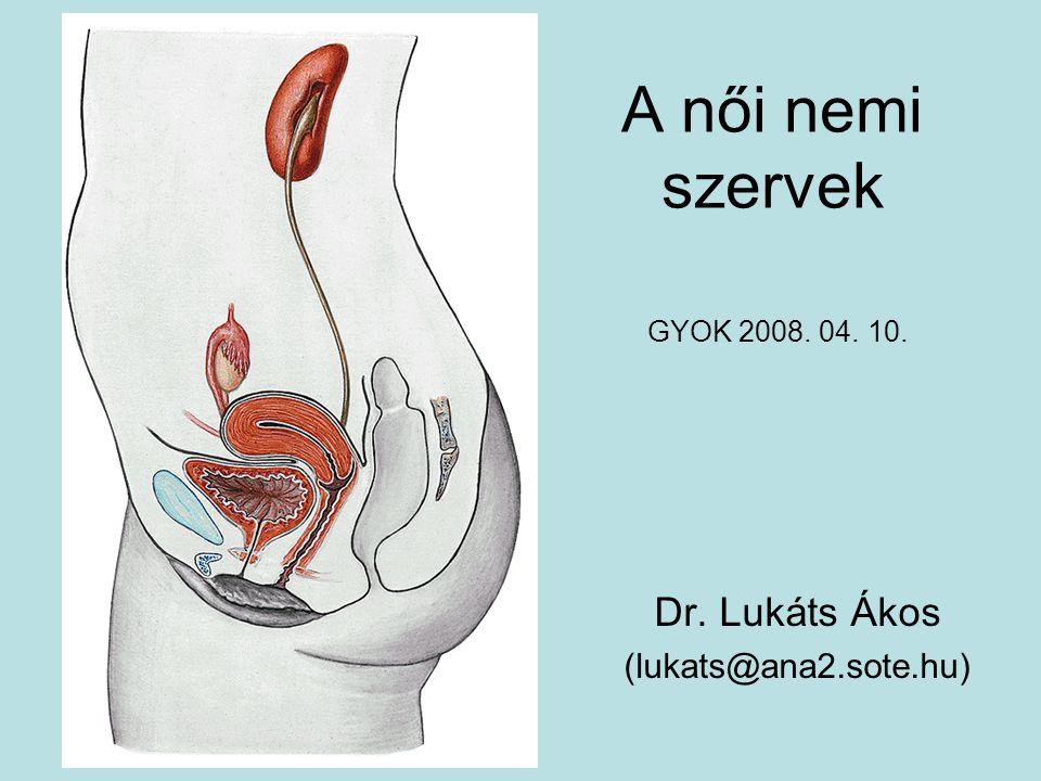 A női nemi szervek Dr. Lukáts Ákos (lukats@ana2.sote.hu) GYOK 2008. 04. 10.