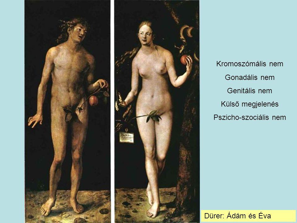 Dürer: Ádám és Éva Kromoszómális nem Gonadális nem Genitális nem Külső megjelenés Pszicho-szociális nem