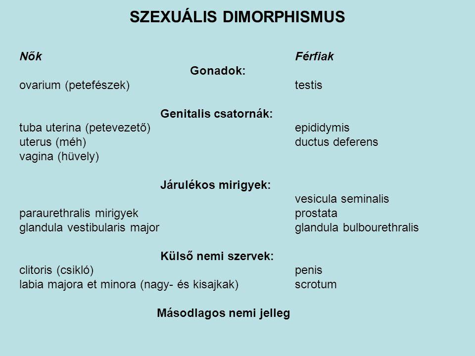 Szintjei: Kromoszómális nem: XX vagy XY nemi kromoszómák (a megtermékenyítés pillanatában eldől) Gonadalis nem: ovarium vagy testis (hormontermelés – tesztoszteron, AMH: férfi irányú differenciálódás) Genitalis nem (fenotípus): genitalis csatornák külső nemi szervek .