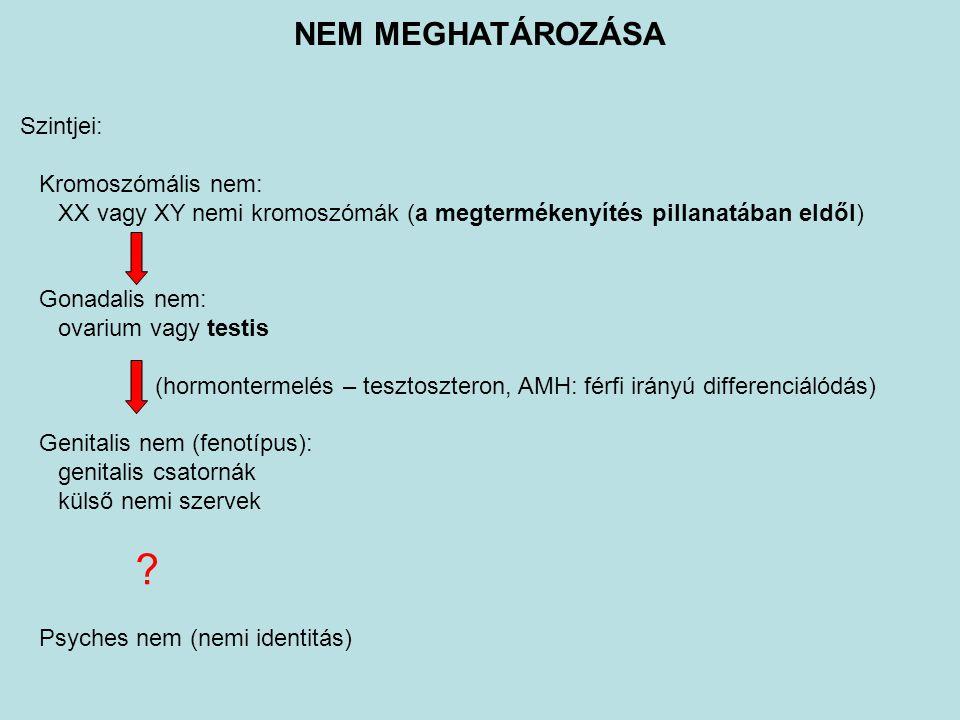 Szintjei: Kromoszómális nem: XX vagy XY nemi kromoszómák (a megtermékenyítés pillanatában eldől) Gonadalis nem: ovarium vagy testis (hormontermelés –