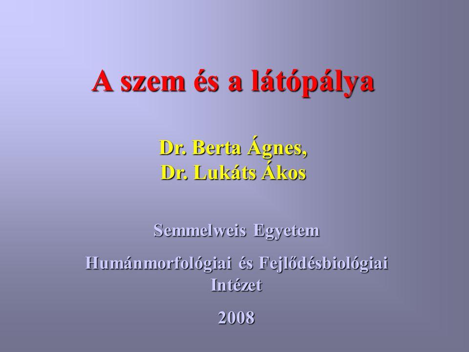 A szem és a látópálya Semmelweis Egyetem Humánmorfológiai és Fejlődésbiológiai Intézet 2008 Dr. Berta Ágnes, Dr. Lukáts Ákos