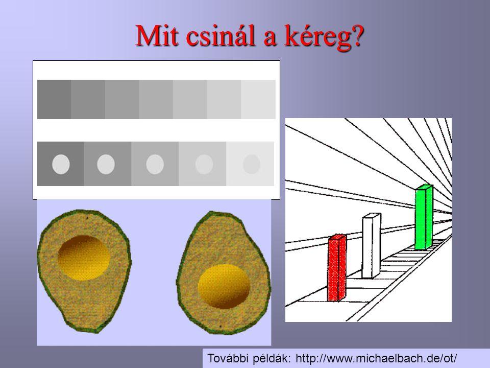 További példák: http://www.michaelbach.de/ot/ Mit csinál a kéreg?