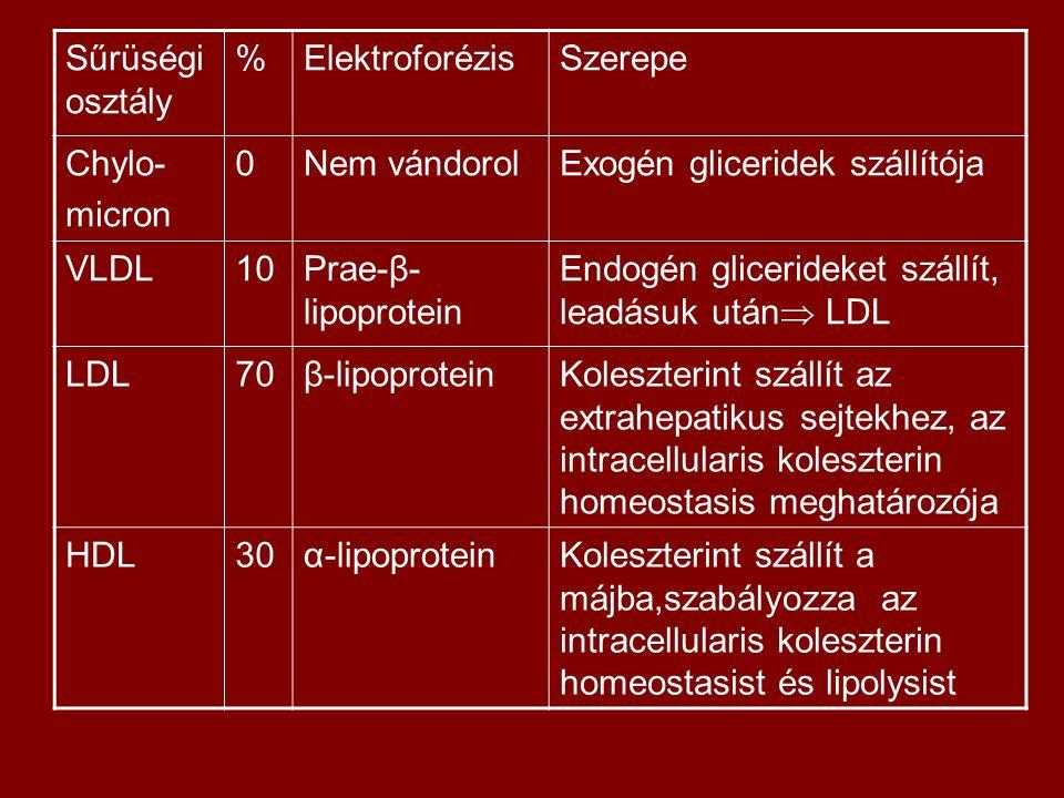 Sűrüségi osztály %ElektroforézisSzerepe Chylo- micron 0Nem vándorolExogén gliceridek szállítója VLDL10Prae-β- lipoprotein Endogén glicerideket szállít