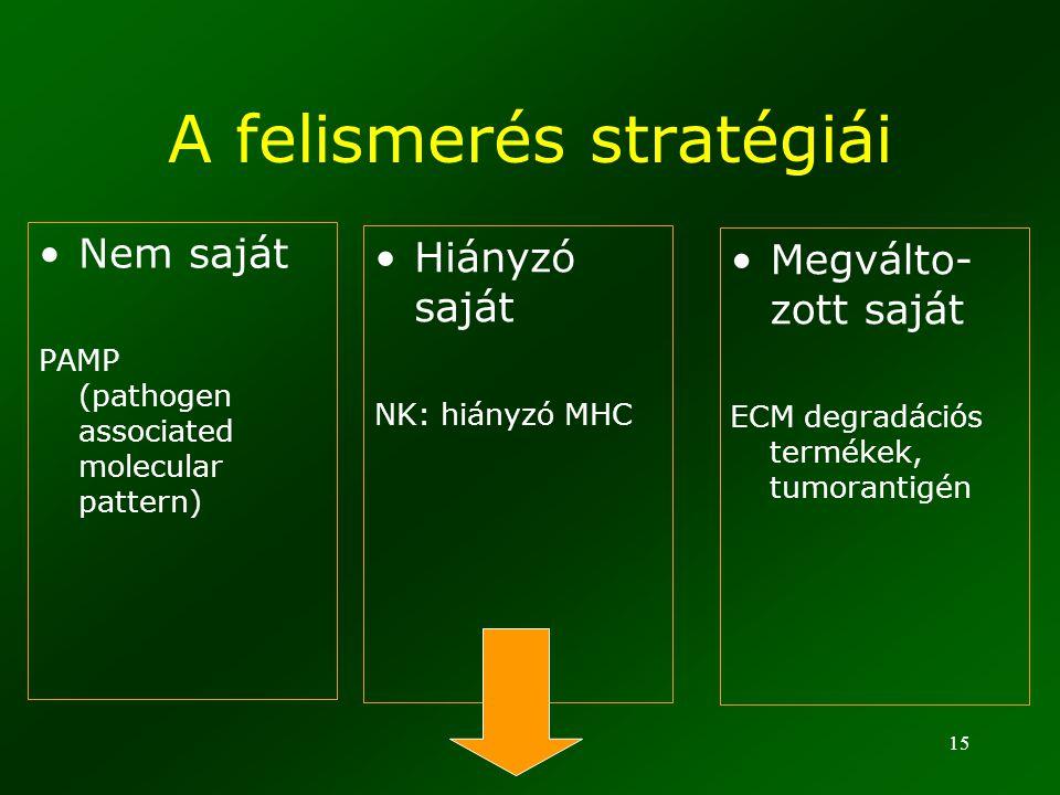15 A felismerés stratégiái Nem saját PAMP (pathogen associated molecular pattern) Hiányzó saját NK: hiányzó MHC Megválto- zott saját ECM degradációs t