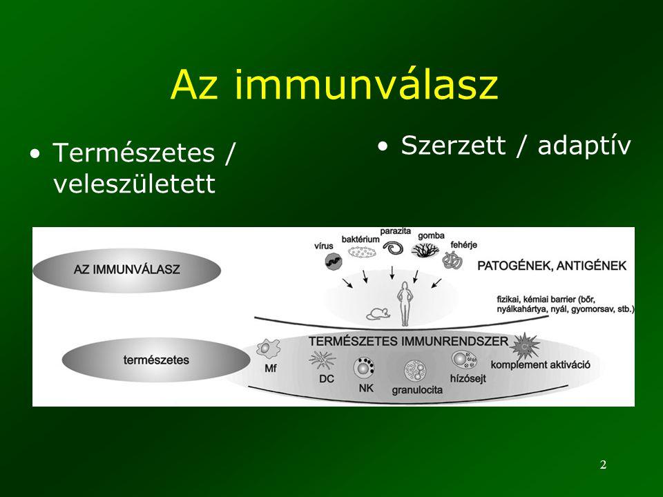 2 Az immunválasz Természetes / veleszületett Szerzett / adaptív