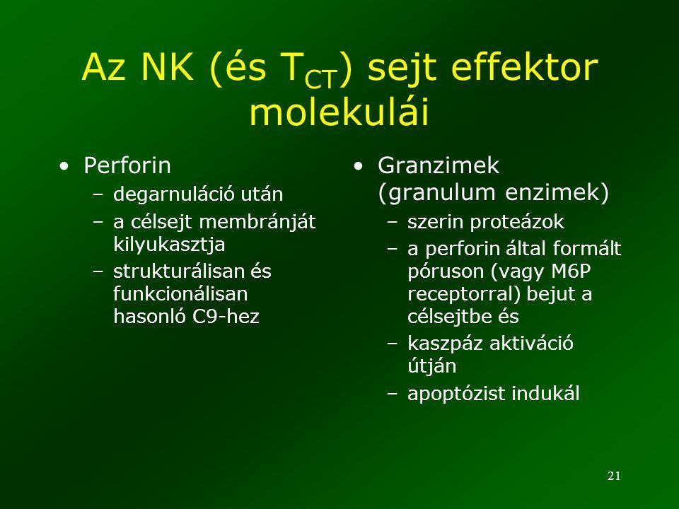 21 Az NK (és T CT ) sejt effektor molekulái Perforin –degarnuláció után –a célsejt membránját kilyukasztja –strukturálisan és funkcionálisan hasonló C