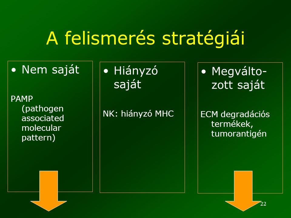 22 A felismerés stratégiái Nem saját PAMP (pathogen associated molecular pattern) Hiányzó saját NK: hiányzó MHC Megválto- zott saját ECM degradációs t