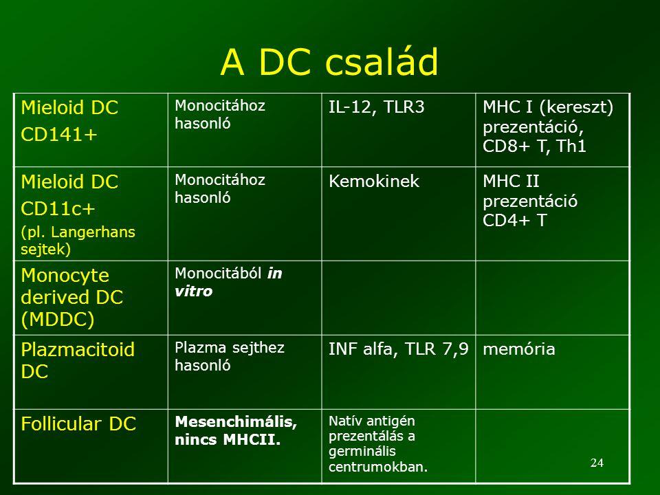 24 A DC család Mieloid DC CD141+ Monocitához hasonló IL-12, TLR3MHC I (kereszt) prezentáció, CD8+ T, Th1 Mieloid DC CD11c+ (pl. Langerhans sejtek) Mon